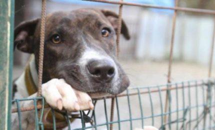 Palermo, una giornata da cani per cani (e per chi li difende)