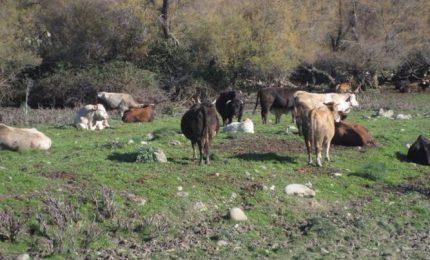 Zootecnia e agricoltura in Sicilia: su alcune cose siamo d'accordo con la CIA, su altre, no