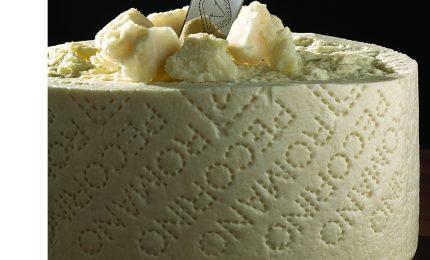 Siglato l'accordo sul latte di pecora: perché i pastori sardi stanno sbagliando/ MATTINALE 304