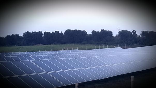 Gli attacchi di Xilella agli olivi pugliesi: c'entrano gli impianti di energia fotovoltaica?