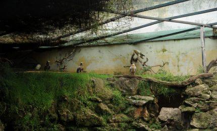 Avvoltoi a Palazzo d'Orleans: tranquilli, sono quelli buoni