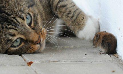In Australia vogliono uccidere 2 milioni di gatti!