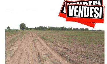 Agricoltori siciliani indebitati e colpiti dalle aste giudiziarie? Arrivano i 'bandi 'elettorali' del PSR.../ MATTINALE 243