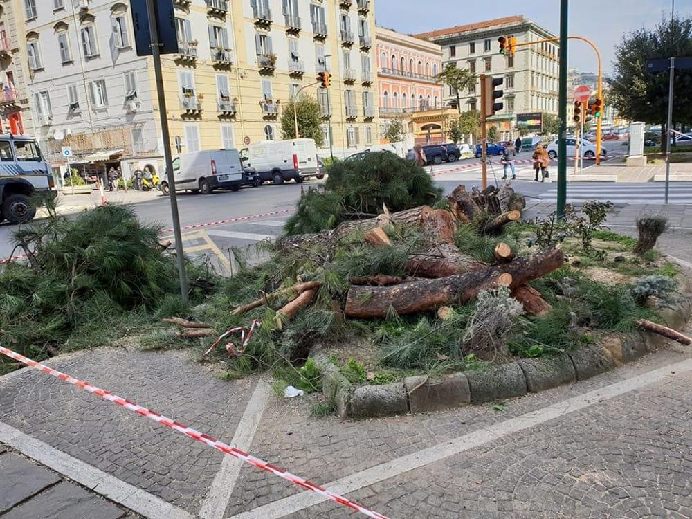 Legna 'fuorilegge' nelle pizzerie e alberi tagliati nelle città: dietro c'è il business di forni elettrici e biomasse?/ MATTINALE 284