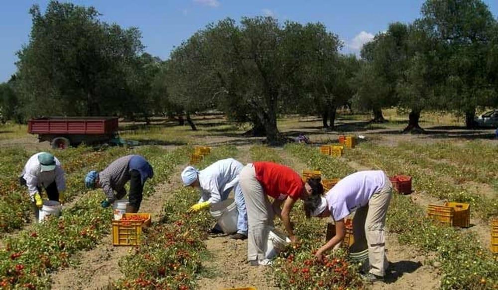 Giusto denunciare il caporalato in agricoltura. Ma chi protegge gli agricoltori e i consumatori siciliani?/ MATTINALE 295