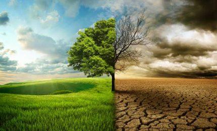Perché tanti alberi di Carrubo del Ragusano stanno morendo? Morti naturali o c'è dell'altro?