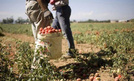 Agricoltura del Sud in crisi: controlli sul lavoro sì, controlli sui prodotti no/ MATTINALE 258