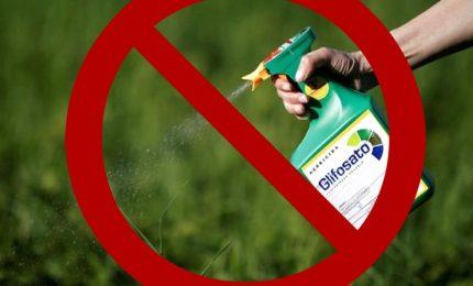 Il glifosato e le micotossine DON presenti nel grano saranno il banco di prova dei Verdi europei