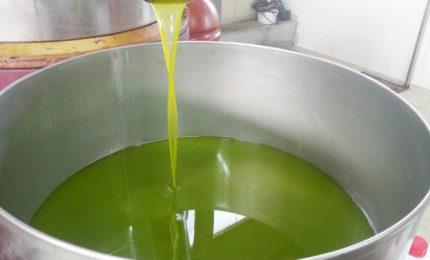 Olio d'oliva extra vergine/ Uno studio tedesco scopre la presenza di idrocarburi in alcune marche