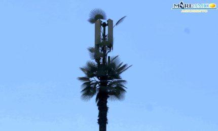 Mareamico 'sgama' a San Leone (Agrigento) un'antenna schermata con finti rami di albero!