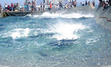 La Lega affossa la tonnara di Favignana. E' un attacco sconsiderato a tutta la Sicilia