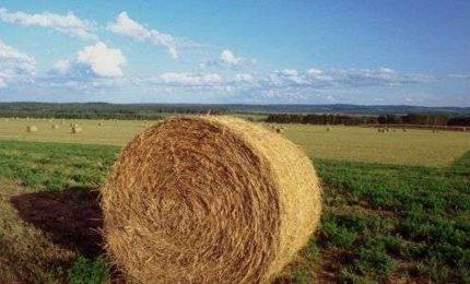 """Fondi europei in agricoltura, Ettore Pottino: """"Il PSR 2014-2020 rischia di essere il più devastante di tutti i tempi"""""""