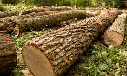 In mezzo mondo abbattono gli alberi perché intralcerebbero il wireless del 5G?