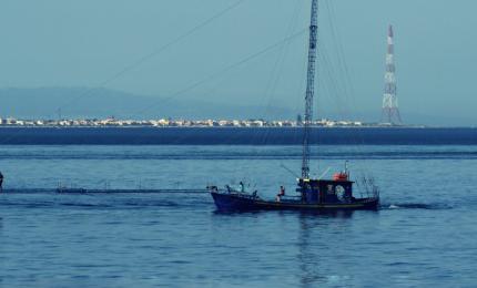 L'Ars ha fatto una cosa buona: una legge per valorizzare le 'Feluche' dello Stretto di Messina