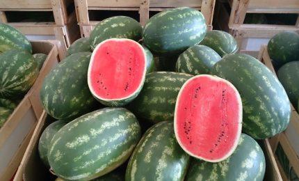 Perché la frutta estiva, spesso, non ha più sapore. Che fare?/ MATTINALE 352