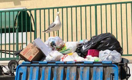 Emergenza rifiuti a Palermo: esposto dei grillini alla Procura della Repubblica