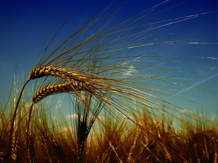 Un consiglio ai produttori di grano duro del Sud: non vendete il prodotto ora, perché il prezzo salirà