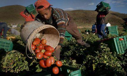 I nuovi schiavi deportati dall'Africa per lavorare nei campi di pomodoro