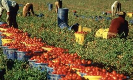 Raccolta del pomodoro: lo sfruttamento del lavoro voluto dall'elite globalista. Ma anche altro...