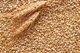 Prezzo del grano duro in aumento in tutto il Sud tranne che a Palermo