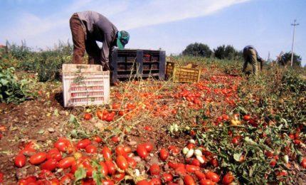 L'agricoltura siciliana scomparirà se non si abbasserà il costo del lavoro/ MATTINALE 342