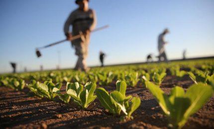 ... e con la scusa dei 'Caporali' stanno finendo di ammazzare l'agricoltura!