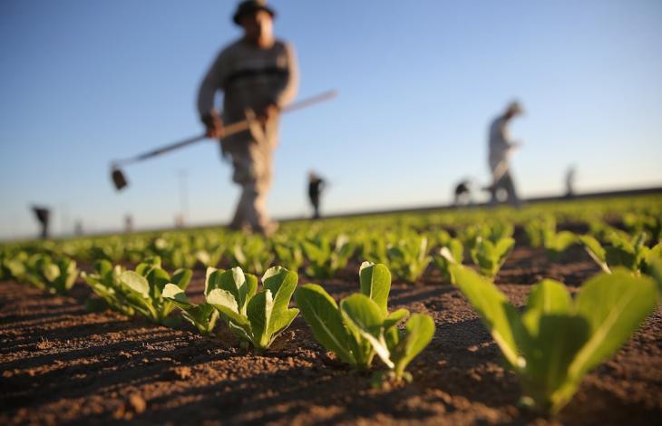 … e con la scusa dei 'Caporali' stanno finendo di ammazzare l'agricoltura!
