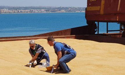 E' possibile capire come ci faranno mangiare il grano duro canadese arrivato in Sicilia?/ MATTINALE 361