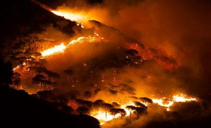 Incendi di Palermo e Monreale: Musumeci, Cordaro e il Corpo Forestale si sono 'auto-assolti'...