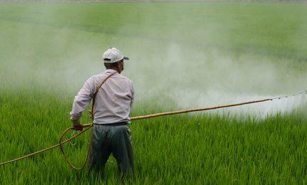 Ministero della Salute e Coldiretti: frutta e ortaggi che arrivano dall'estero sono pieni di pesticidi!/ MATTINALE 377