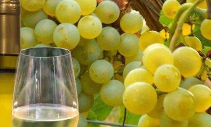 Industriali del vino 1-produttori siciliani di uva Grillo zero...