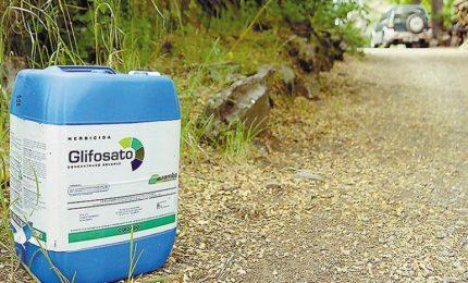 Oltre il 97% dei prodotti alimentari commercializzati nel nostro Continente contiene residui di glifosato/ MATTINALE 412