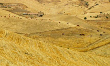 In crescita il prezzo del grano duro del Sud (tranne che in Sicilia dove...)