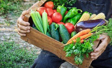 'Mancia comu parri', l'Udc premierà 11 aziende agricole siciliane