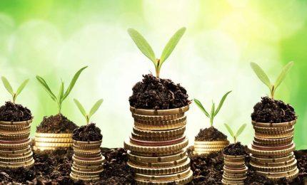 La Banca del grano duro in Sicilia: iniziativa lodevole o tentativo di 'finanziarizzare' anche questo settore?/ MATTINALE 423