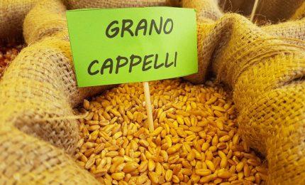 Attenzione: il Nord e le industrie del Nord vogliono 'sfilare' il grano duro al Sud/ MATTINALE 433
