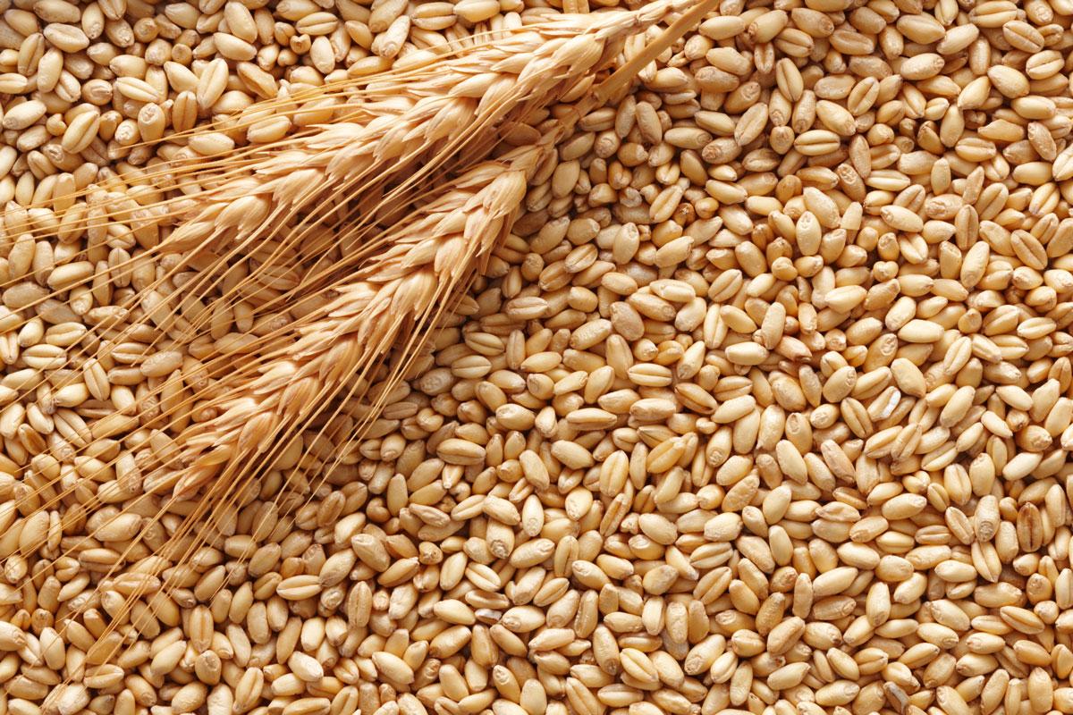 La banca del grano duro in Sicilia: la replica del comitato promotore di Sicilian Wheat Bank