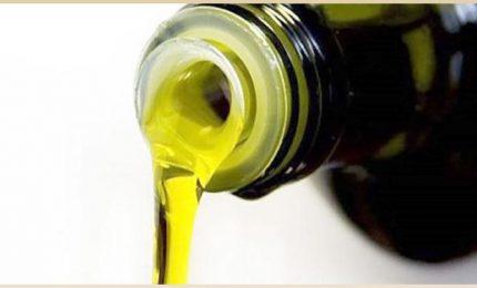 """Cosimo Gioia, agricoltore: """"Come si fa ad acquistare un litro di olio d'oliva extra vergine a 2,79 euro?""""/ MATTINALE 448"""