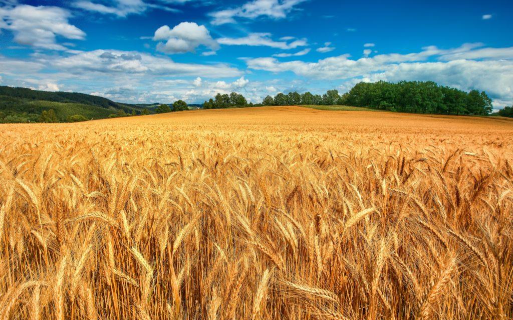 Ma che combina la RAI (Linea Verde) con il grano duro canadese?/ MATTINALE 455