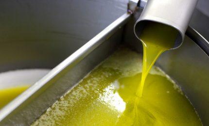 Il dubbio: non è che c'è un legame tra l'olio di palma che arriva in Sicilia e l'olio d'oliva, magari 'extra vergine'?