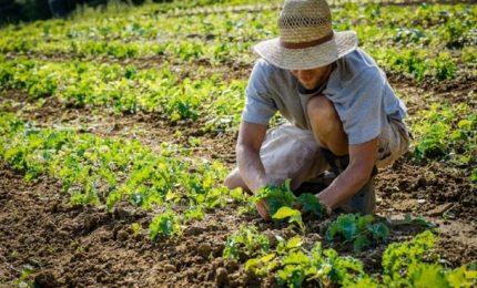Il TAR Sicilia blocca i 260 milioni di euro per i giovani agricoltori: una disgrazia o una recita?