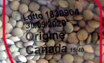 Siamo stati condannati a portare sulle nostre tavole lenticchie canadesi trattate con glifosato?
