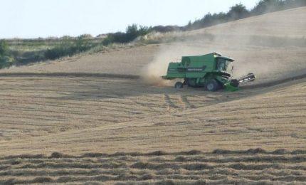 Parte da Foggia il terremoto nel mercato del grano duro del Sud Italia