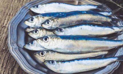Al Convitto nazionale di Palermo una giornata sul pesce azzurro