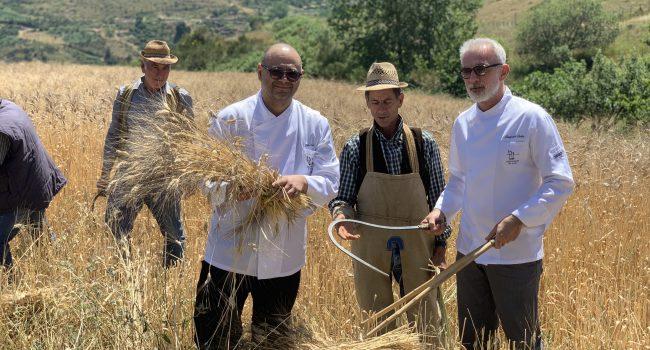 Sui Nebrodi si punta sul pane prodotto con i grani antichi siciliani