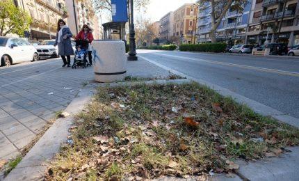 Palermo, 14 alberi abbattuti in via Libertà: non abbiamo altro da aggiungere