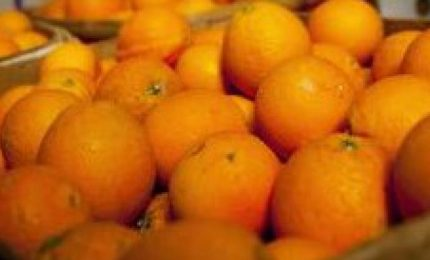 Catania, sequestrate 30 tonnellate di arance prive di etichettatura