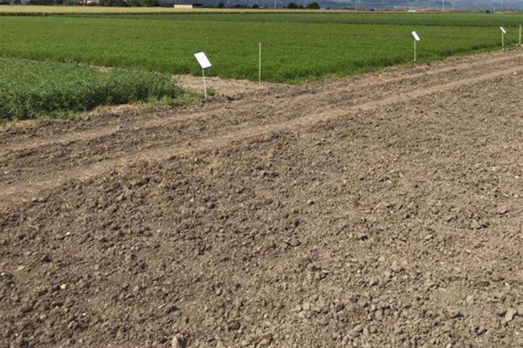 In quali mani finiranno circa 7 mila ettari di terreni agricoli abbandonati del Sud?