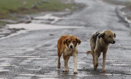 In piena emergenza Coronavirus il Comune di Palermo 'deporta' i cani a Caserta!