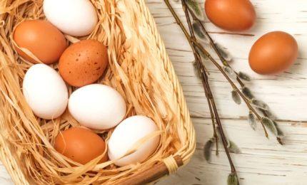 """Perché le uova politically correct"""""""" sono bianche"""